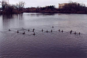 013 Ducks on the Fox River by J2theStock
