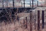 019 Bridge - Appleton WI