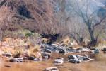 028 Stream - Sabino Canyon AZ