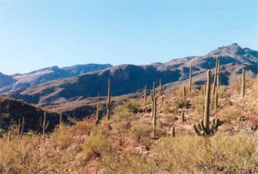 030 Sabino Canyon AZ by J2theStock