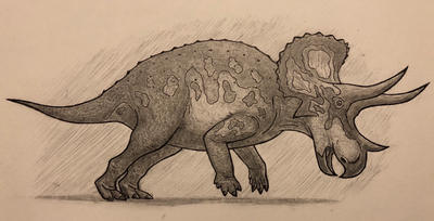 Triceratops doodle