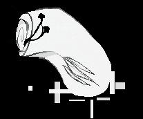 hello seattle,, by saw-bones