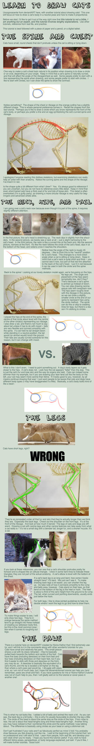 Cat Tutorial: Bodies by Uncognoscente