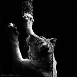 Panthera Leo by NicolasEvariste
