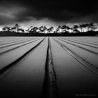 Walk The Line by NicolasEvariste