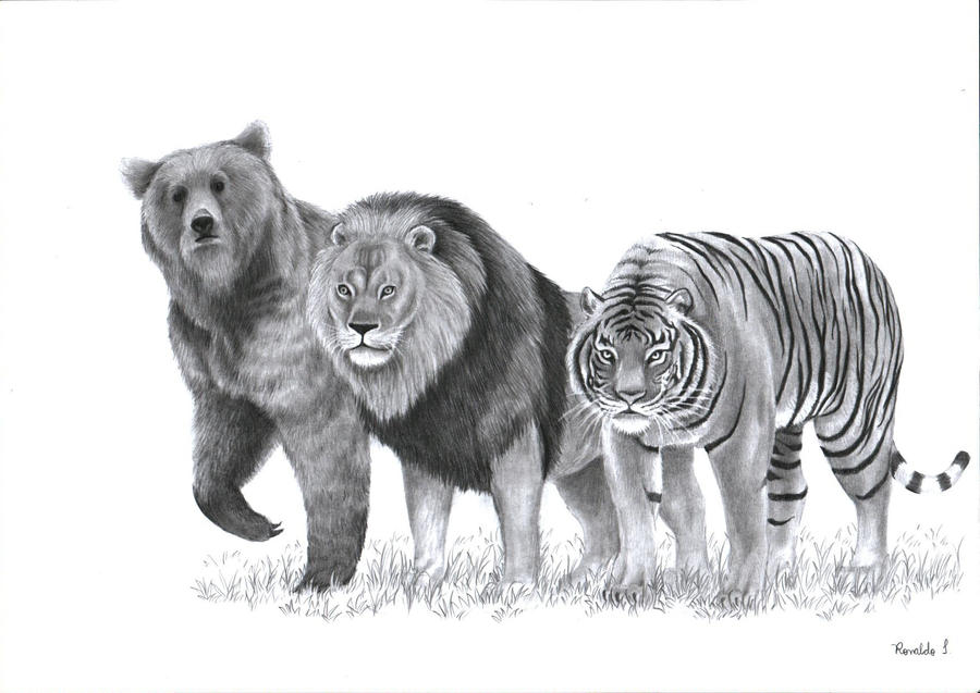 Bear Lion And Tiger By Ronydraw On DeviantArt