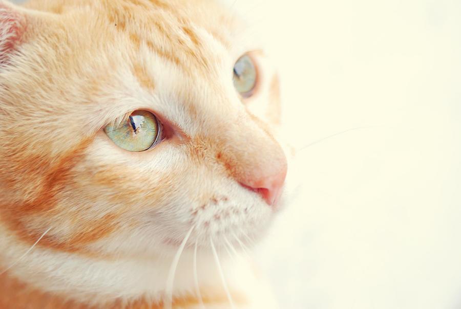 orange: i see the light by ernest-art