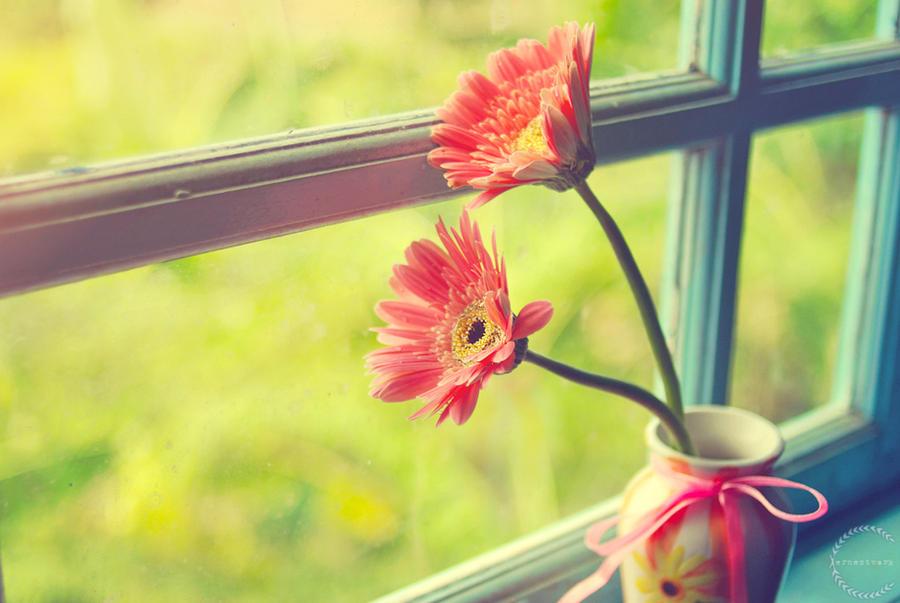 Morning flower 1