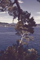 Inseparable trees by oanaunciuleanu
