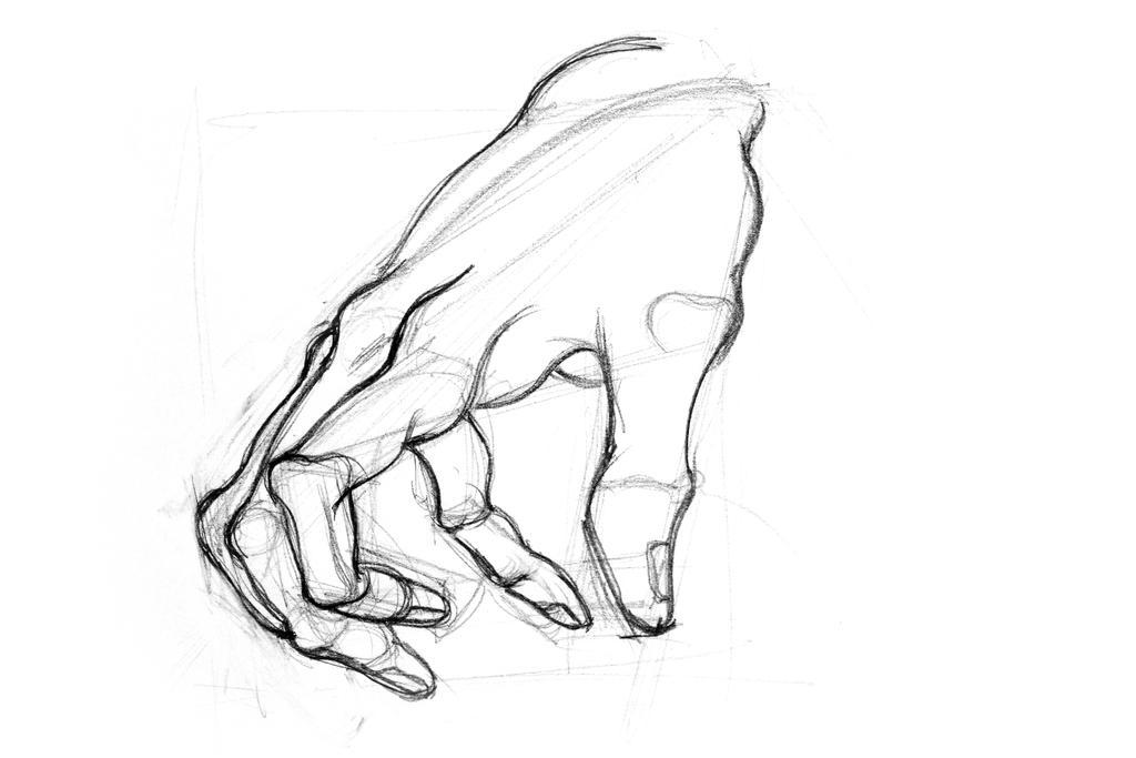 Drawing illustration of hand. Anatomical sketch. by oanaunciuleanu
