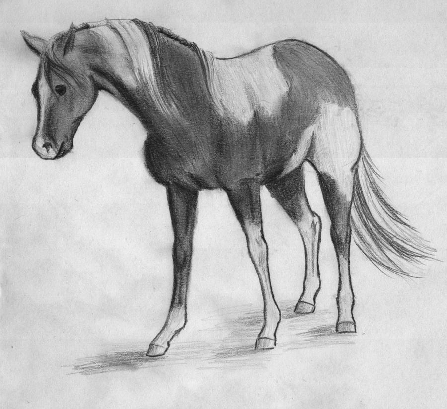 how to draw a paint horse