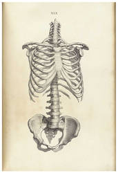 Vintage Human Skeletal 1 by Bnspyrd