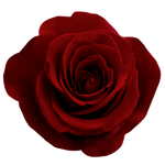 ValentinesDay2012 Rose png
