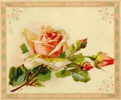 DarlingBudsOfMay-Rose Flwrs5 by Bnspyrd