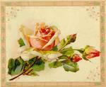 DarlingBudsOfMay-Rose Flwrs5