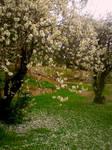 Cherry Blossom Grove 2