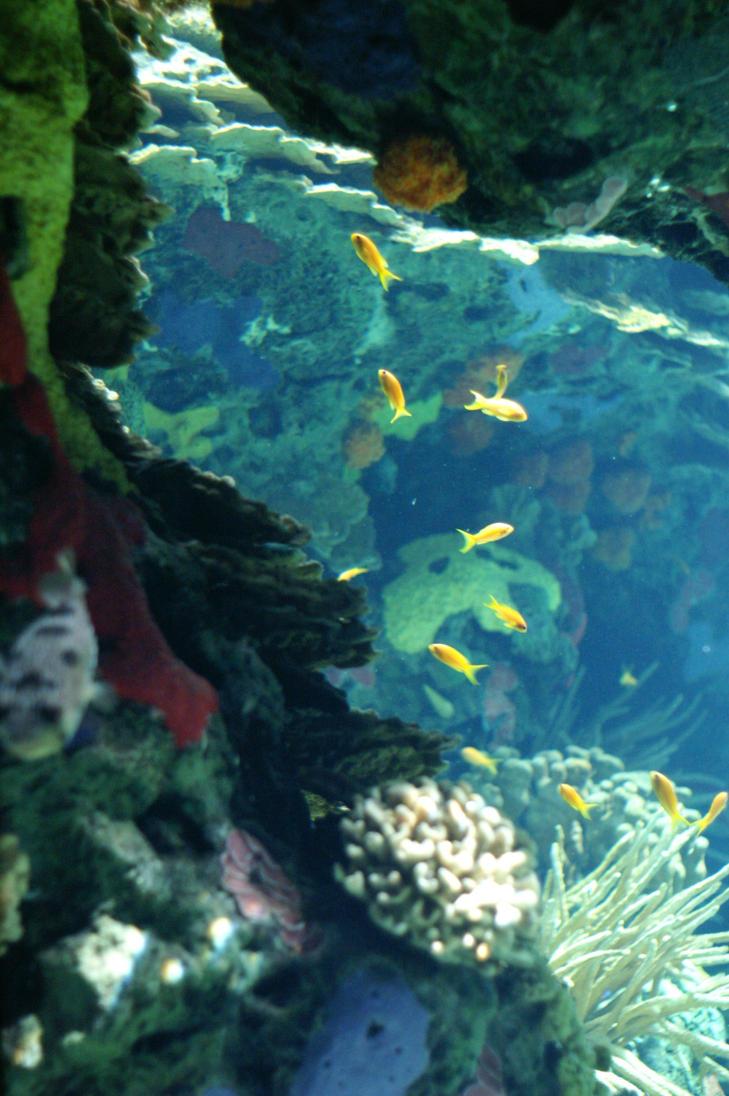 Underwater Cave by SenorMentira on DeviantArt