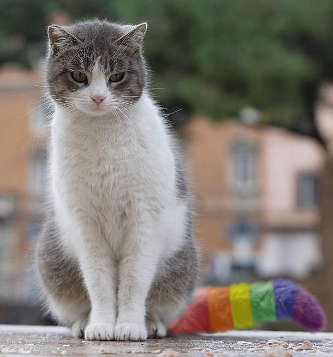 Gay Pride Kitty by WolvesOfSleep