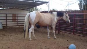 Quarter Horse Stock - 3
