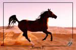Alfateh - pure Arabian horse