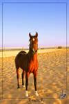 Al-3aredh - Arabian horse