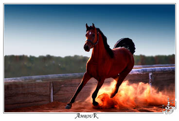 dance on the fire by AMROU-A