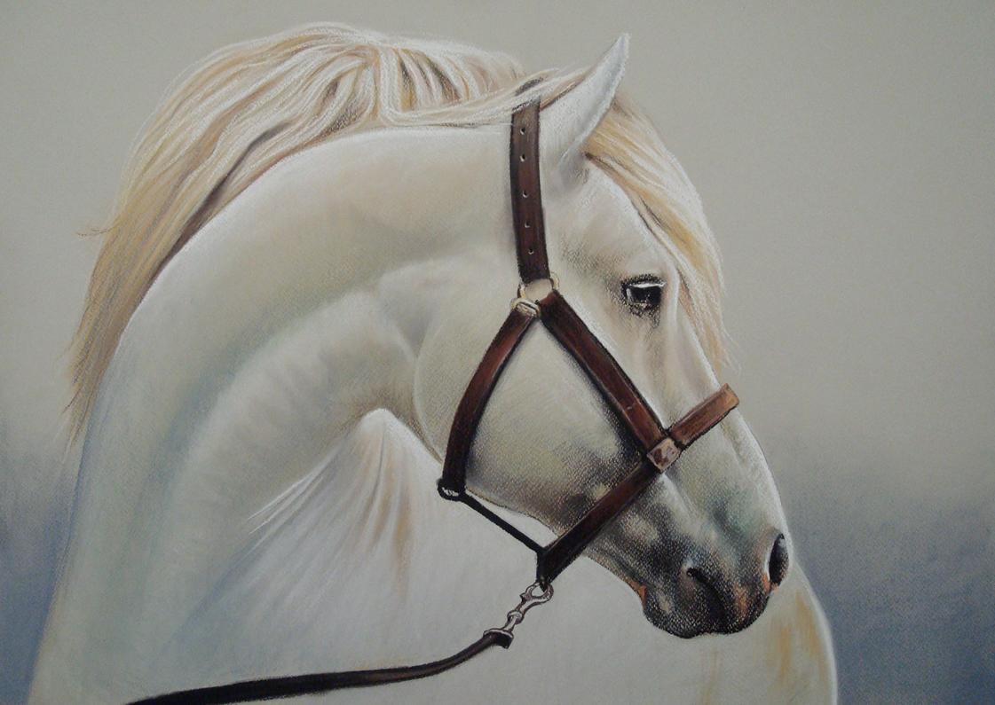 white horse by PASTELIZATOR on DeviantArt