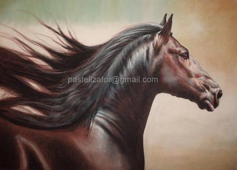 Friesian Pastel Portrait Profil