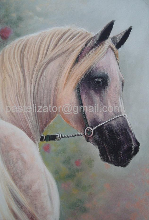 Horse Portrait White Cream Arabian Pastel by PASTELIZATOR