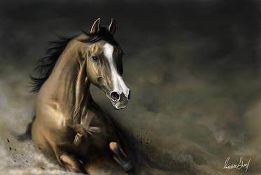 Arabian horse by P-R-O
