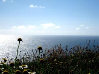 Irish daisy. by Isthisajoke