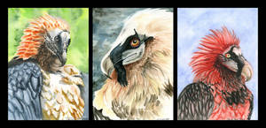 Birthday Bearded Vultures by A-Teivos
