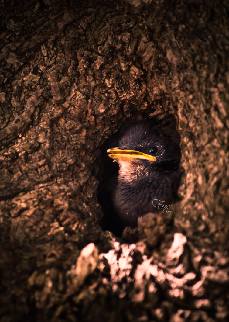 Peepin Bird by Mckronic