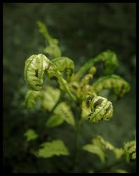 Dragon Plant by Mckronic