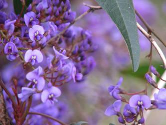 Amethyst Flowers by shadowprincess104