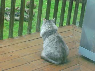 My Cat Outside: TAKE TWO. by AppledPie