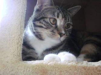 My Cat, Sammy. by AppledPie