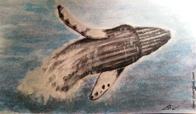 Breach whale by Jaxilon