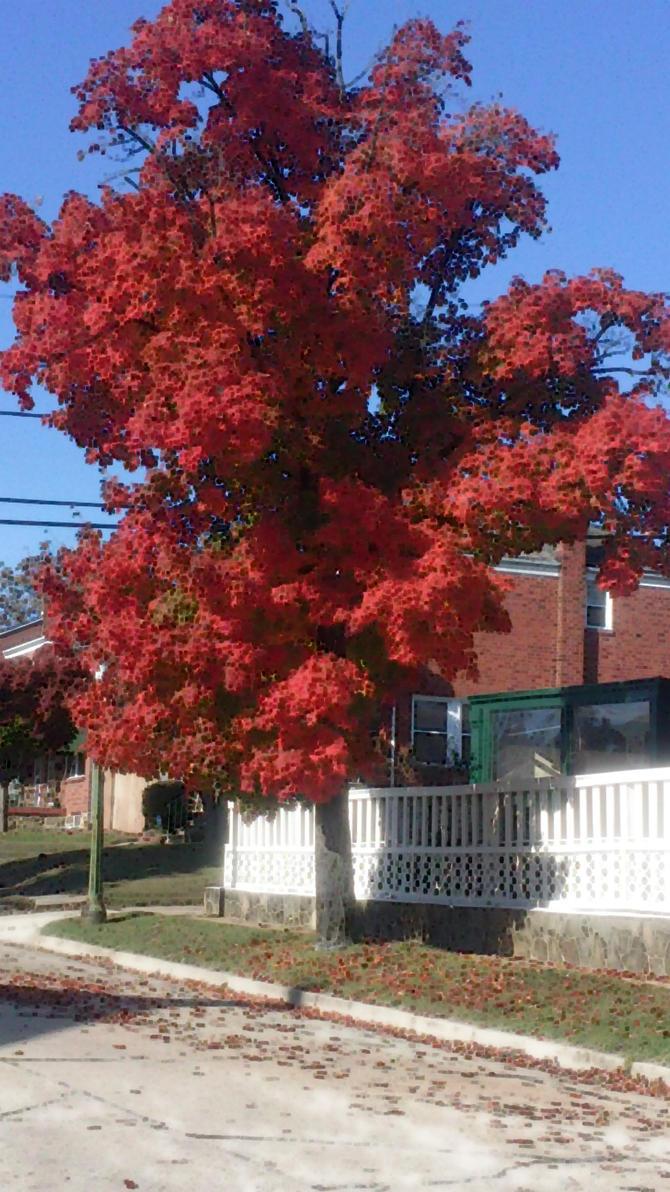 The Red Tree by kreedantillesordo