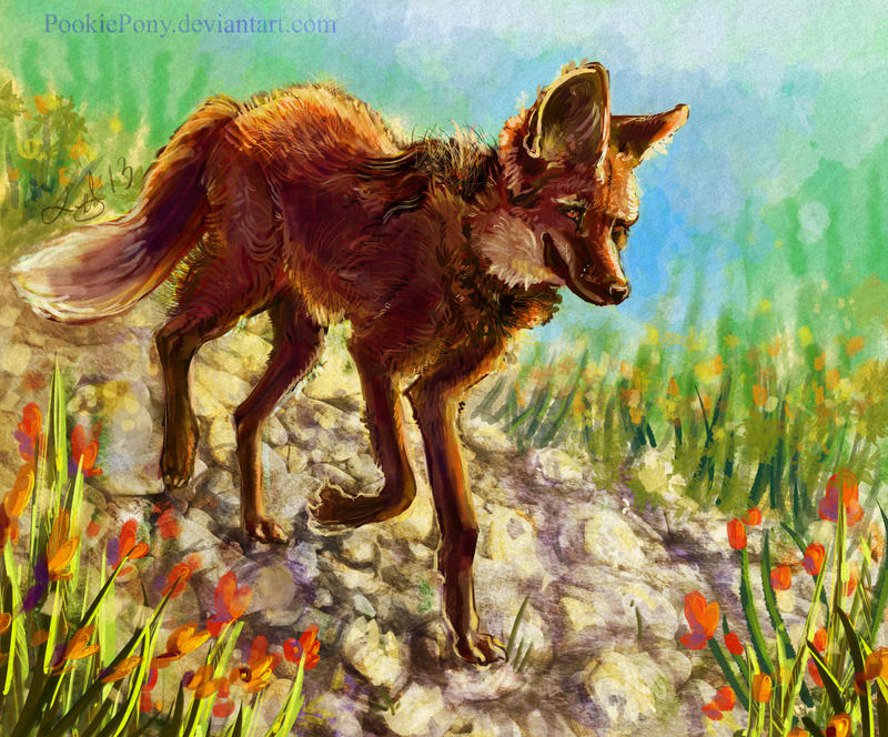 A Lot Of Maned Wolf By Loputyn Deviantart Com On: Maned Wolf By PookiePony On DeviantArt
