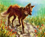 Maned Wolf