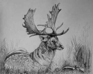Fallow Deer by GersifGalsana