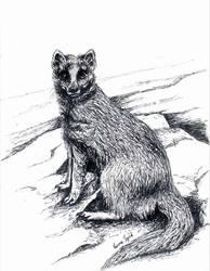 Yellow mongoose - inktober 2018 by GersifGalsana