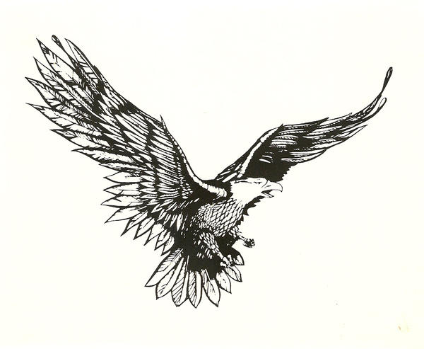 Eagle In Flight Drawing Images amp Pictures Becuo