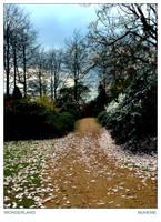 wonderland by boheme