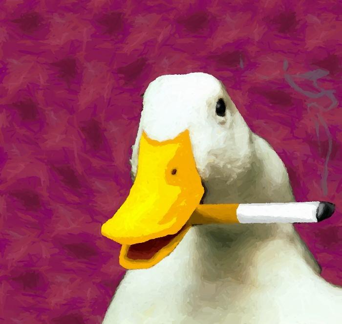 smoking duck by bongwater