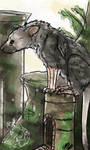 Trico (colored sketch)