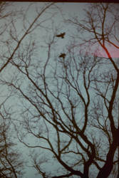 The birds 02 by Jantinus
