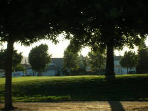 Darker Trees at the Park