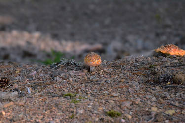 Mushroom 2 by Cheryona